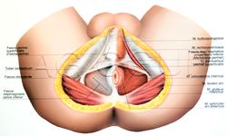 Plansza anatomiczna